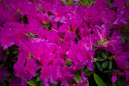 20120426 131702 M9 Digital Camera.jpg