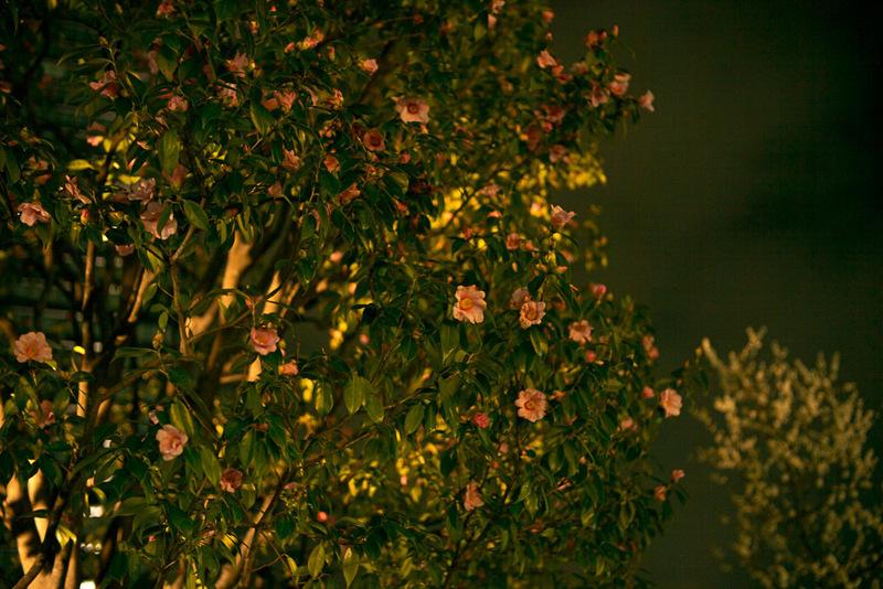 20170225 220702 Leica M-P(Typ240).jpg